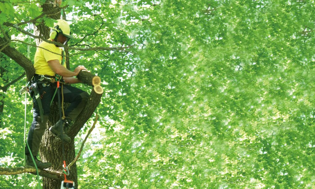 Professional Diploma in Arboriculture(Part-time programme)